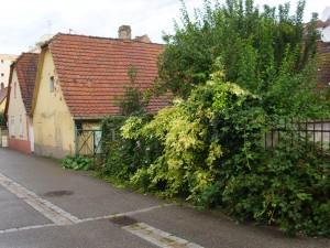 Neudorf, Couronne n° 8 et 10 (rue de la)